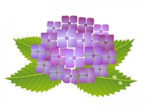 梅雨・紫陽花(あじさい)イラスト素材02