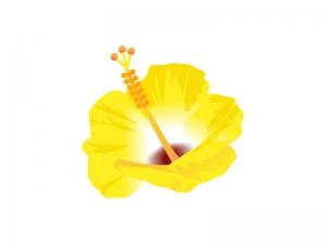 黄色ハイビスカスのイラスト素材 無料イラストダウンロード