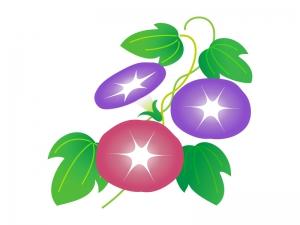 赤と紫の朝顔のイラスト素材 無料イラストダウンロード