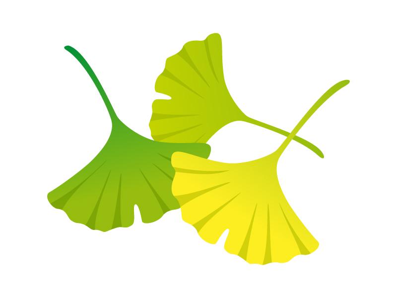 銀杏(いちょう)の葉のイラスト素材01