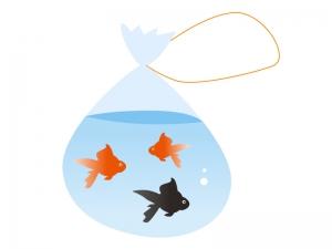 金魚・夏祭りイラスト素材