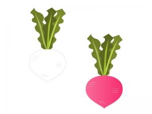 カブ・野菜イラスト素材