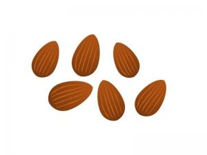 アーモンドナッツのイラスト素材