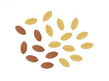 ピーナッツのイラスト素材