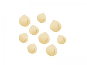 マカダミアナッツのイラスト素材