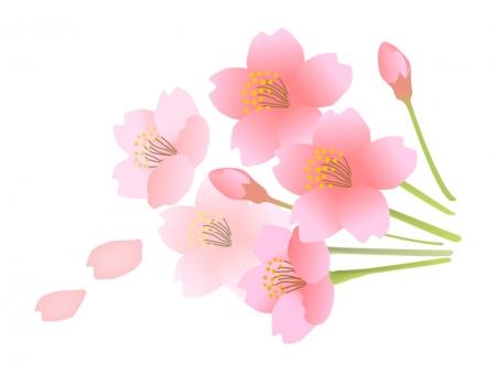 カレンダー 2014 カレンダー a4 : 桜の花のイラスト素材 | 無料の ...