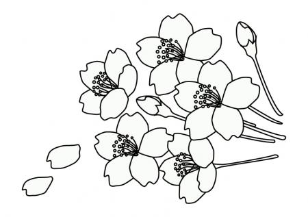 ぬりえ素材・桜の花