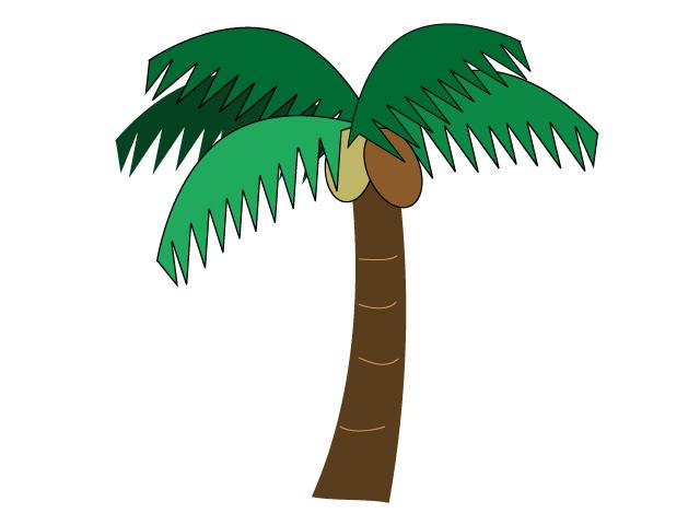 椰子(ヤシ)の実がなっている椰子の木のイラスト
