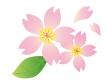 桜の花びら・春イラスト素材