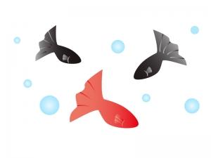 赤と黒の金魚のイラスト素材