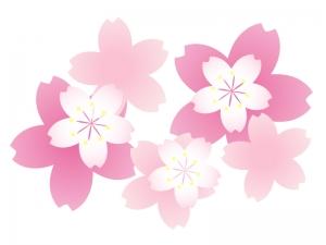 沢山の桜の花びら・春イラスト素材