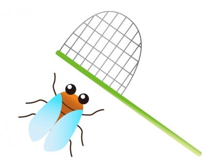セミと虫取り網のイラスト素材