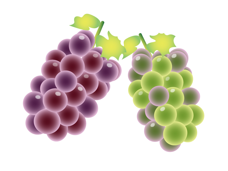 ぶどう(葡萄)・マスカット・果物イラスト素材02