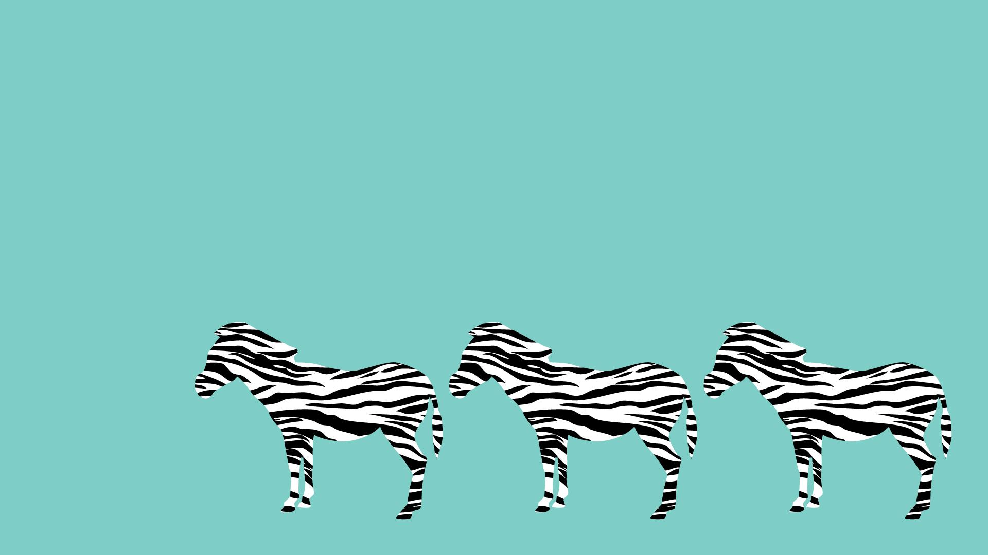 シマウマの壁紙・背景素材 1,920px×1,080px