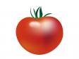 トマト・野菜イラスト素材02