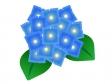 青色の紫陽花のイラスト素材