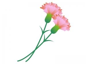 ピンク色のカーネーションのイラスト素材
