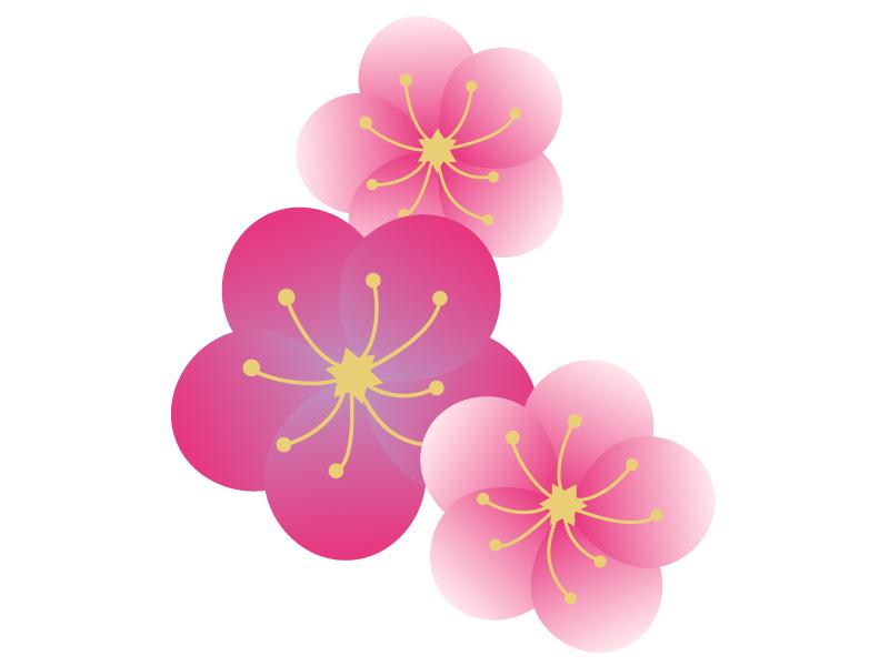 梅の花びらのイラスト素材