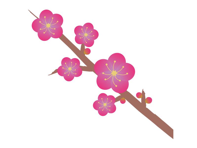 梅の花(枝付き)のイラスト