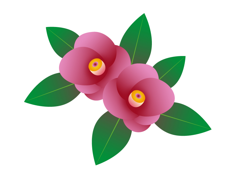 ピンク色の椿のイラスト素材