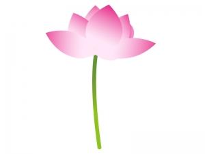 一輪の蓮の花のイラスト素材