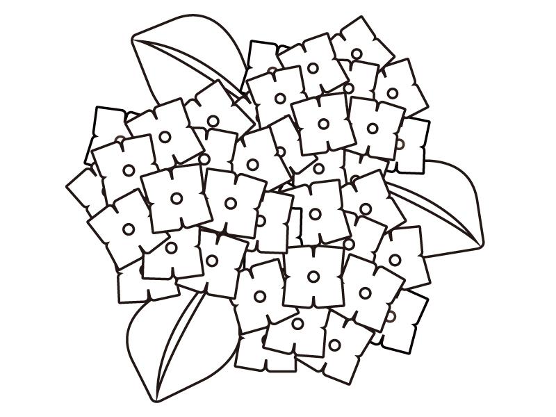 3つ咲いている紫陽花のぬりえ(線画)イラスト素材