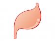 健康的な胃のイラスト素材