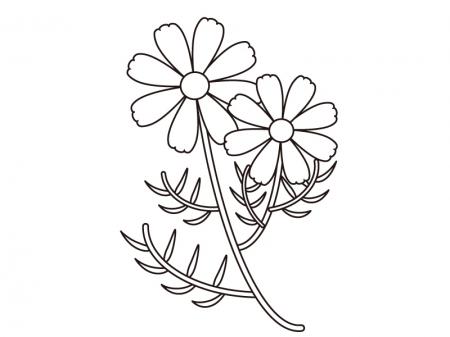 コスモス(秋桜)のぬりえ(線画)イラスト素材