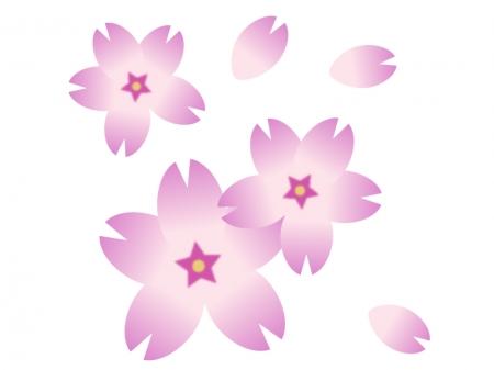 桜の花びら・春のイラスト02
