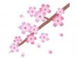 桜の木と花びらのイラスト