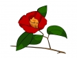 赤い椿のイラスト02