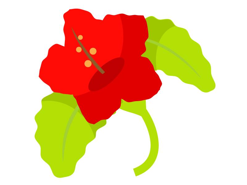 赤いハイビスカスのイラスト素材05