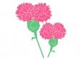 ピンク色のカーネーションのイラスト02