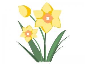 黄色いスイセンのイラスト