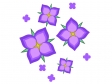紫陽花,あじさい,アジサイ,6月,夏,梅雨,花,植物