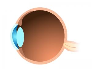 横から見た目玉(眼球)のイラスト