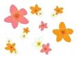 ピンク色とオレンジ色の小花のイラスト