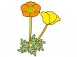 オレンジ色と黄色のポピーのイラスト