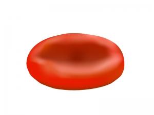 赤血球のイラスト