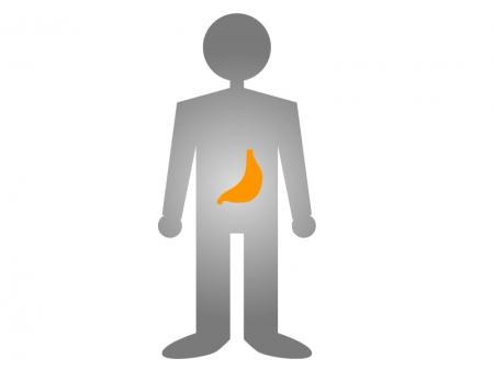人体と胃のイラスト