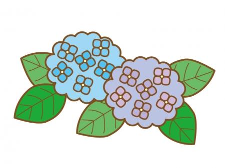 青色の紫陽花のイラスト03
