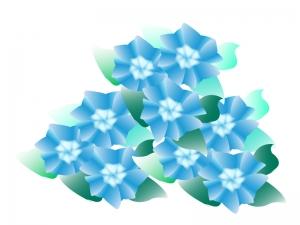 三輪の青色の紫陽花のイラスト