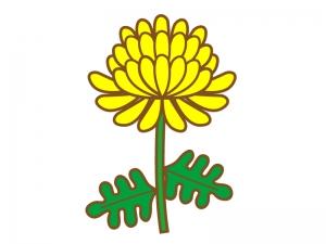 黄色い一輪の菊のイラスト