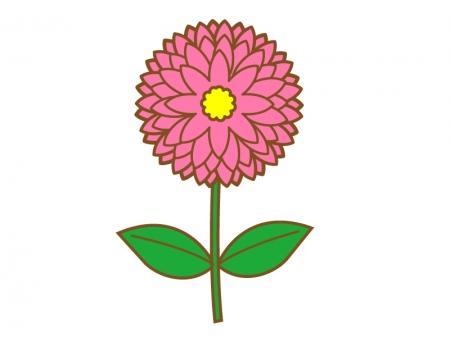 ピンク色の一輪のダリアのイラスト