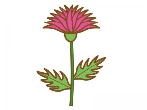 一輪のピンク色のアザミのイラスト