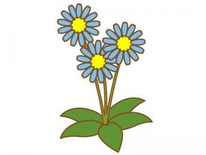 三輪咲いたデイジーのイラスト