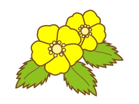 鮮やかな黄色の山吹のイラスト