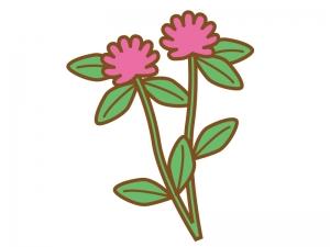 アカツメクサ(赤詰草)のイラスト