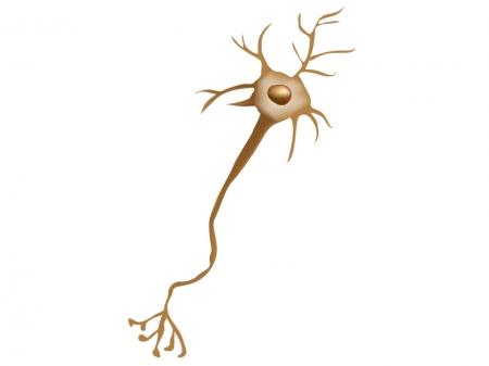 神経細胞のイラスト