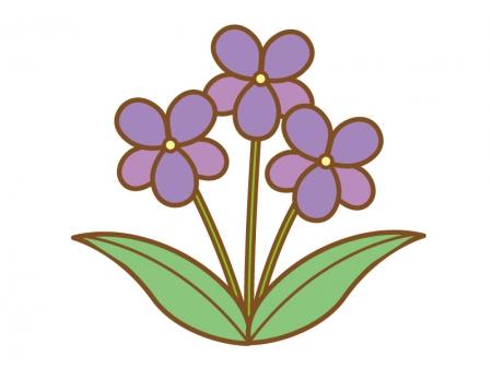 紫色のスミレのイラスト